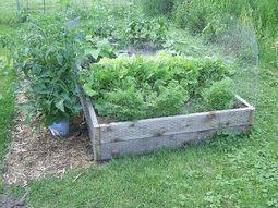 Organic Vegetable Gardening 40 items